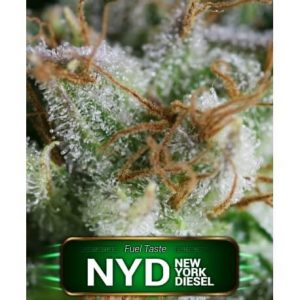 NYD GeaSeeds