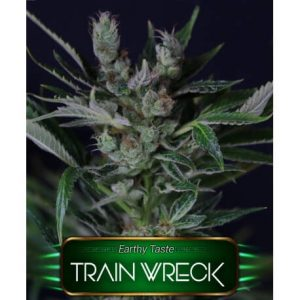 TRAIN WRECK GeaSeeds