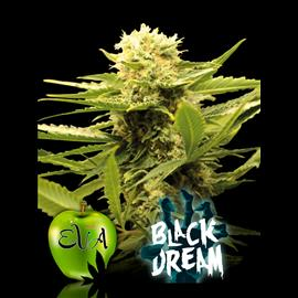 BLACK DREAM 100%