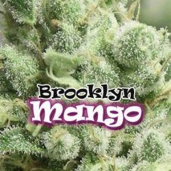Brooklyn Mango 4 Fem. Dr. Underground