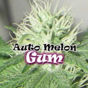 Melon Gum Auto 4 Fem. Dr. Underground