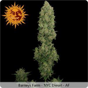 NYC Diesel (Auto) 5 Fem. Barney's Farm