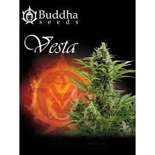 Vesta de Buddha Seeds