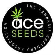 ace-seeds