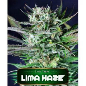 Lima Haze GeaSeeds