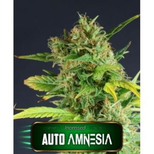 auto amnesia geaseeds