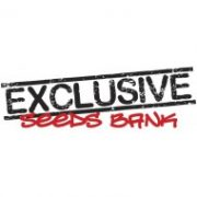 EXCLUSIVE SEEDS BANK