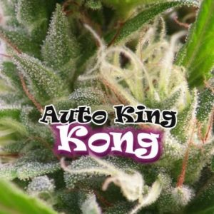 Auto King Kong 4 Fem. Dr. Underground