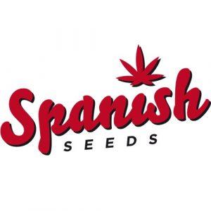 CBD Widow 50 Fem. Spanish Seeds