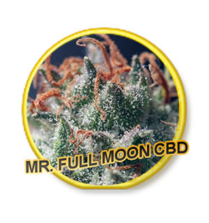 FULL MOON CBD 100% MR HIDE