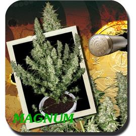 MAGNUM BLISTER (10) 100% BUDDHA SEEDS BANK