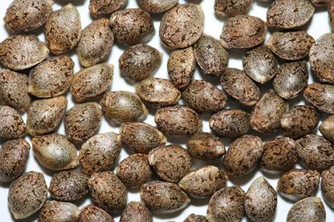 semillas a granel